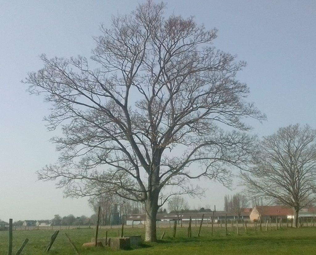 Photo d'un arbre, instant présent